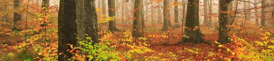 [Image: fall-tree-banner.jpg]